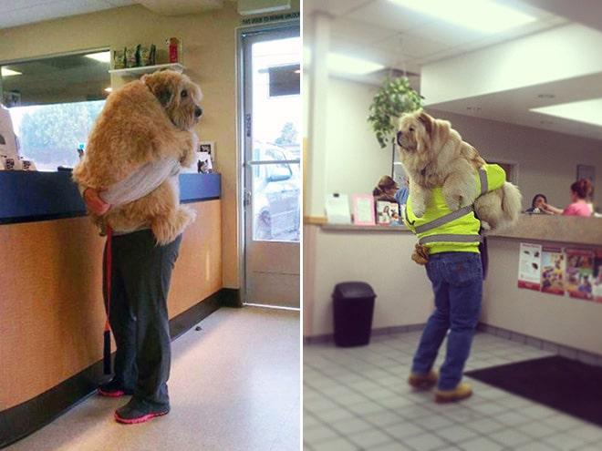 люди с своими собаками