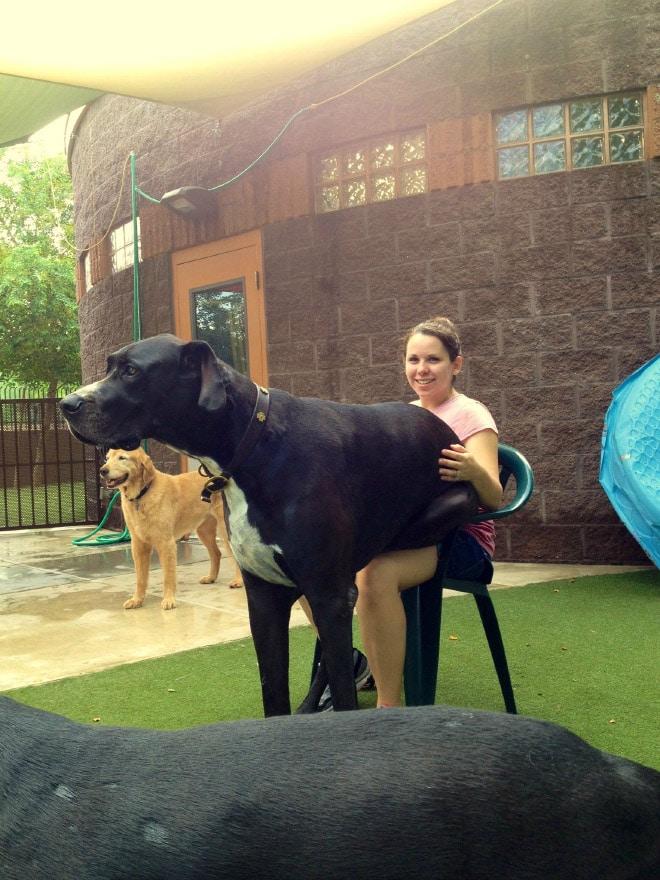 собака сидит на девушке