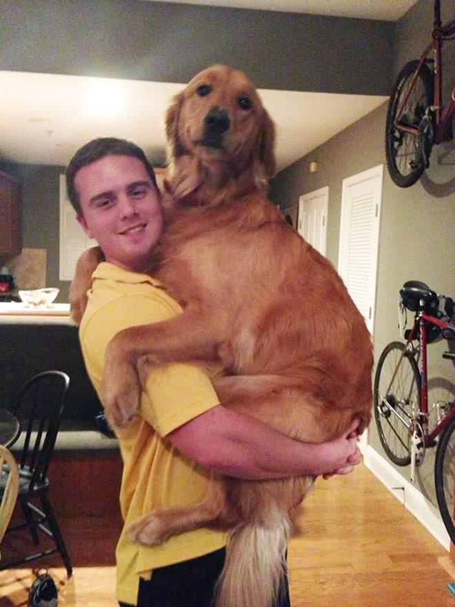 мужчина и рыжий пес