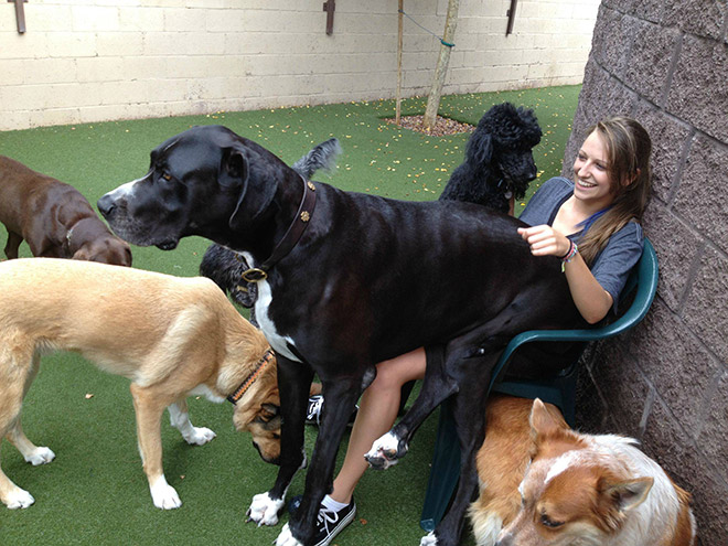 собаки и девушка