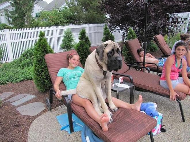 собака сидит с хозяйкой