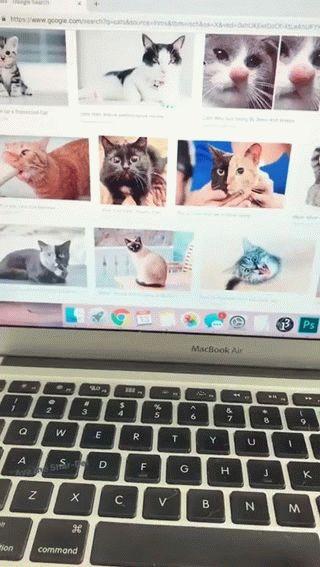 собака закрывает ноутбук с котами