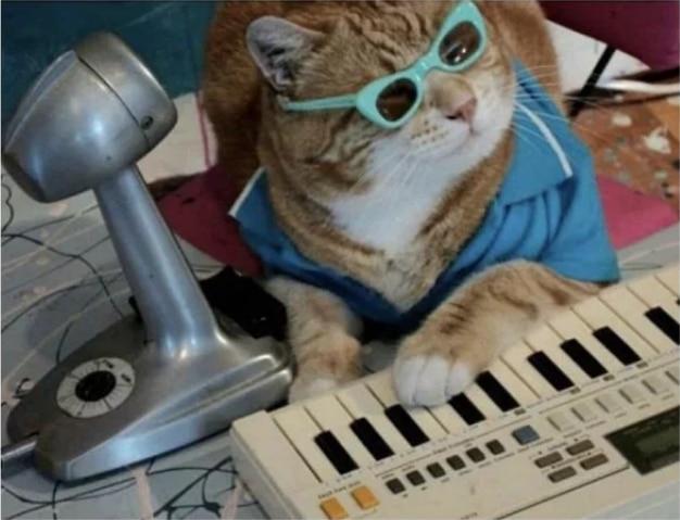 рыжий кот в очках за синтезатором