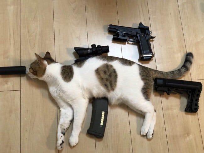 кот и оружие