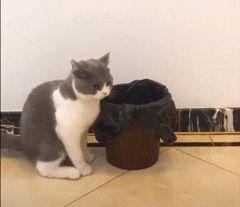 кот садится в ведро