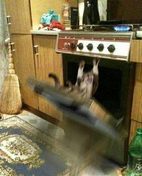 кот падает в духовку