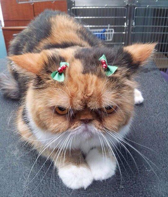 кошка с бантиками