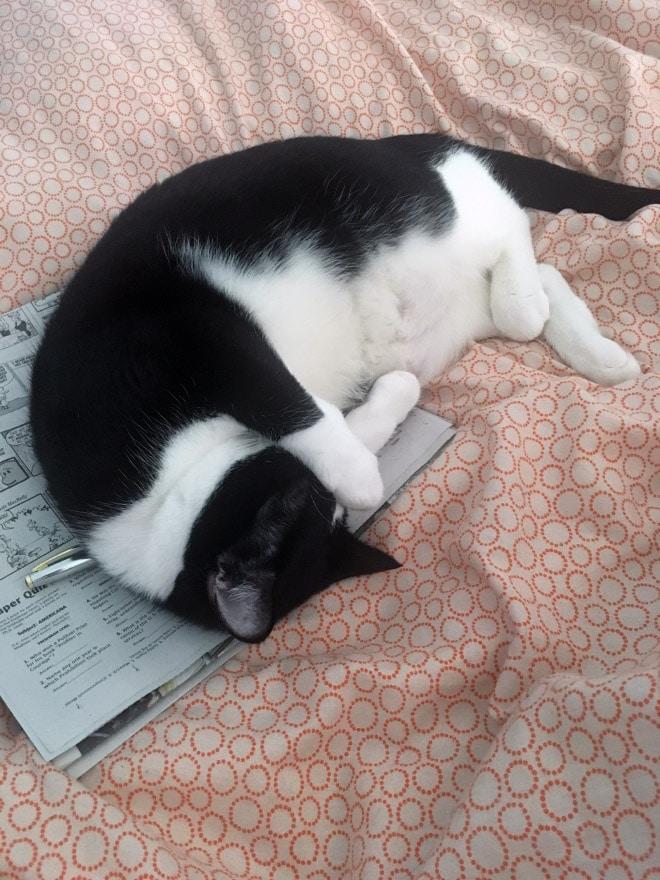 кот спит на газете