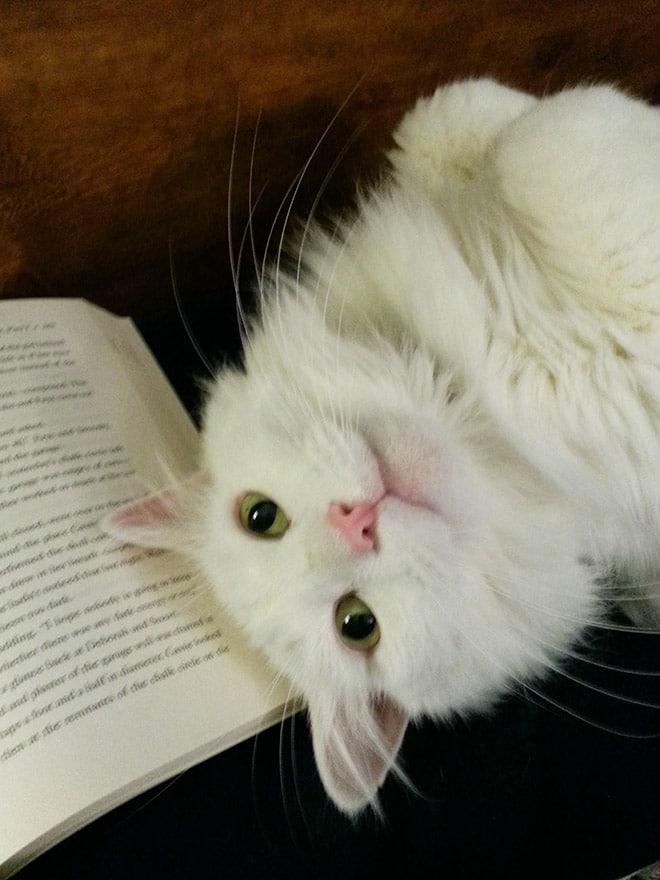 белый кот и книга