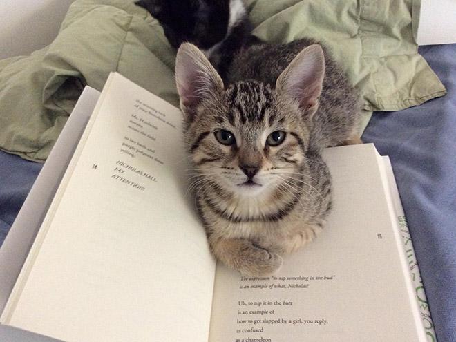кот лежит на книге