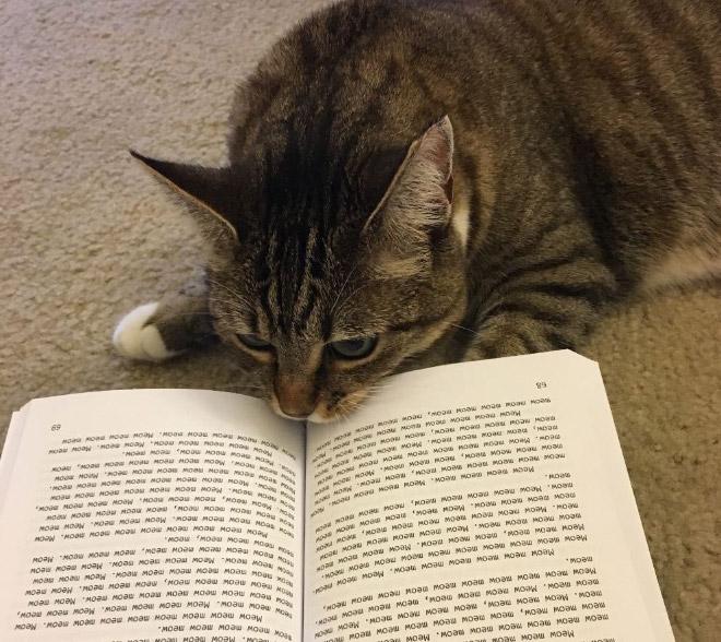 полосатый кот и книга