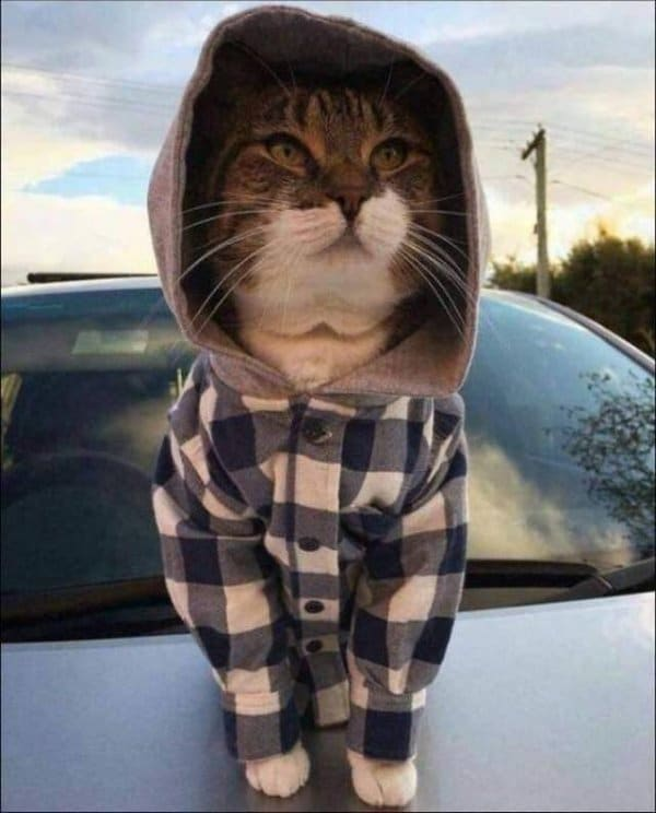 кот в клетчатой рубашке с капюшоном