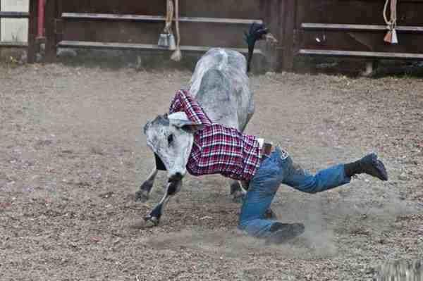 мужчина с теленком