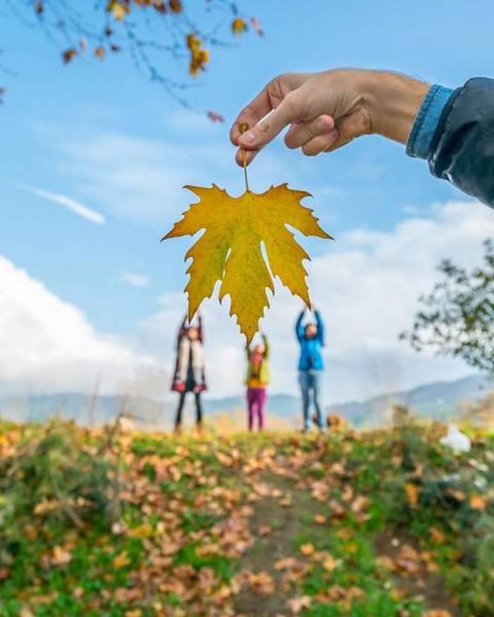 люди и кленовый лист