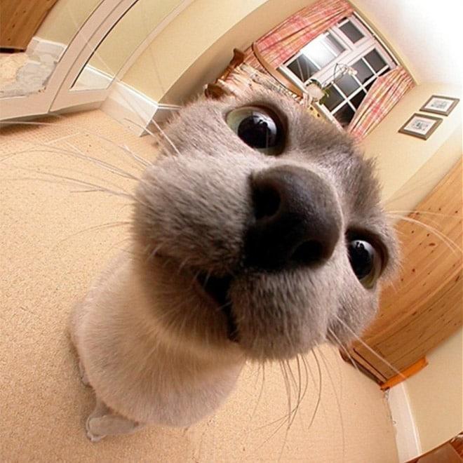 серый кот смотрит в камеру