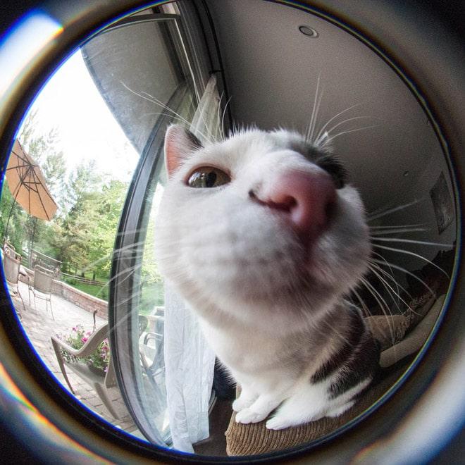 кот в объективе камеры