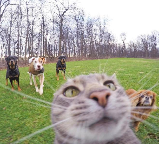 серый кот и собаки