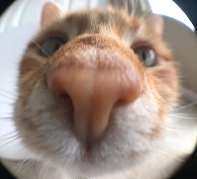 рыжий кот в камере