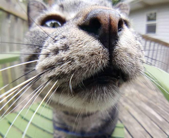 серый кот крупным планом