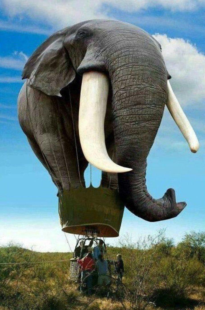 воздушный шар в виде слона