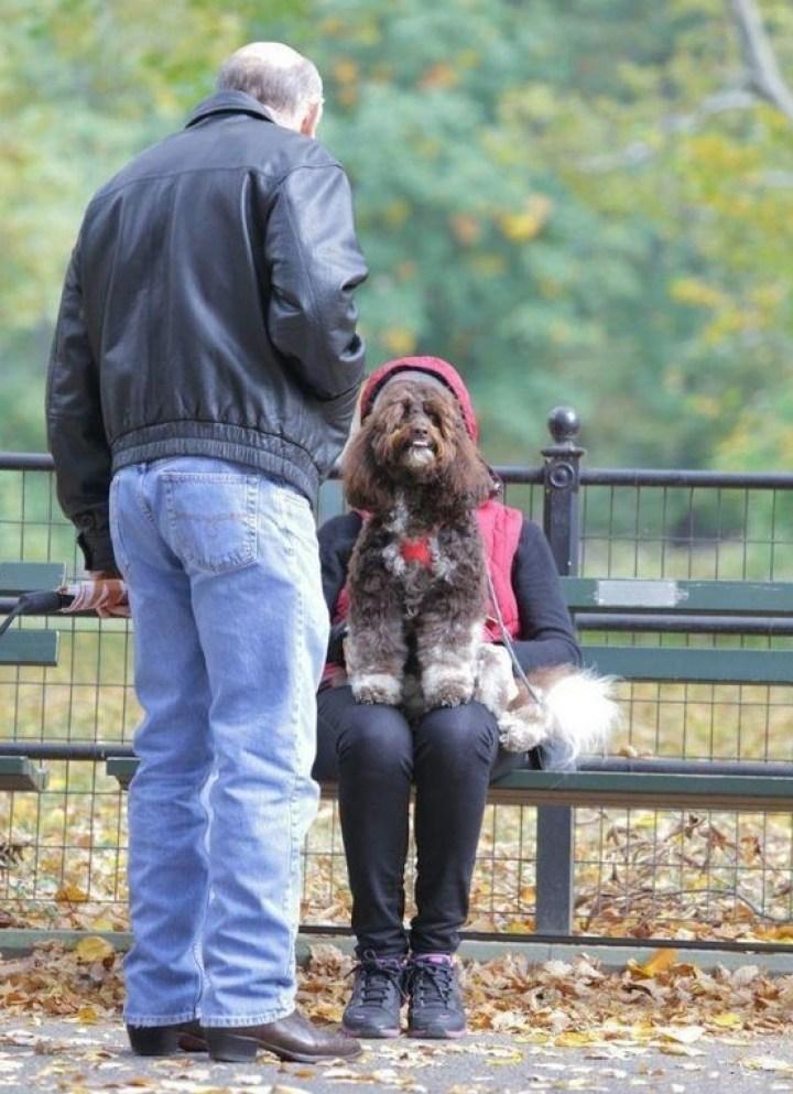 женщина с собакой на лавке
