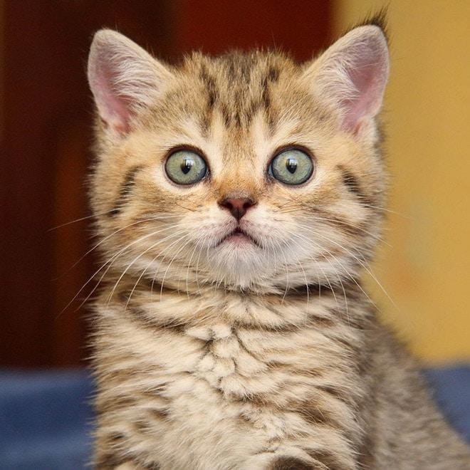 забавный котенок