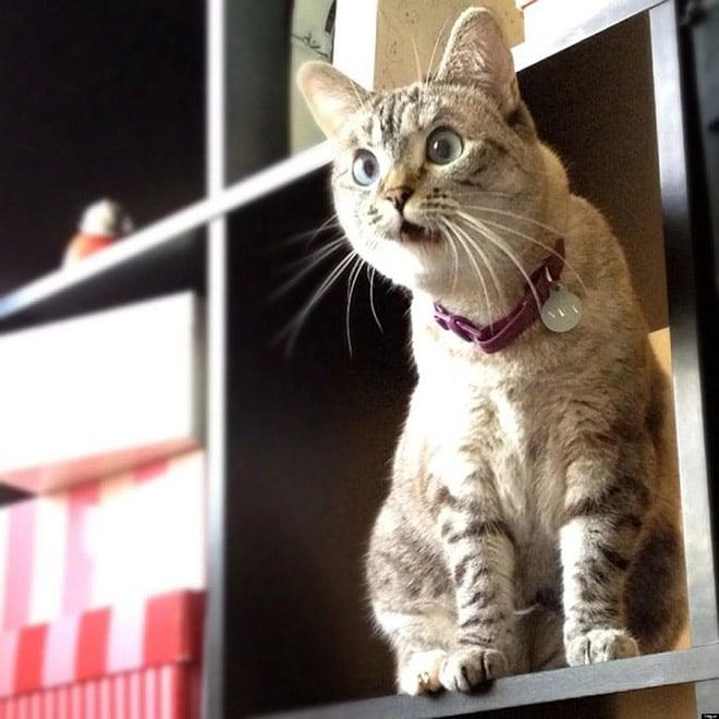 кот и шкаф