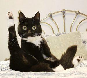 черная кошка на кровати