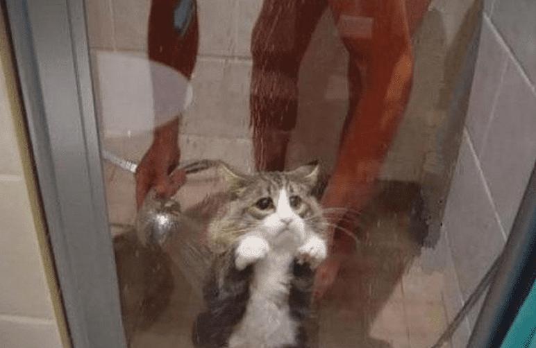 кот в душе