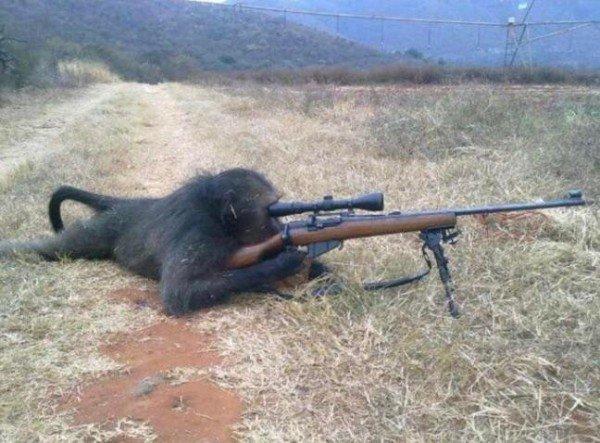 обезьяна с ружьем