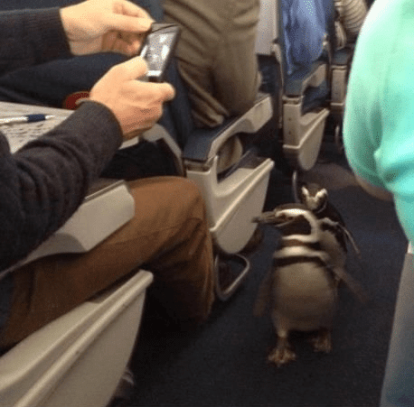пингвины в самолете