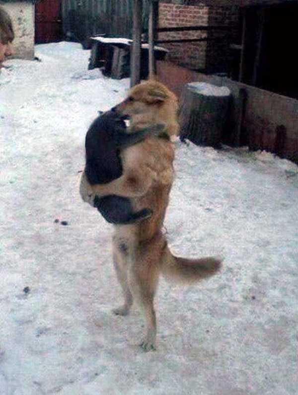 собака держит кота
