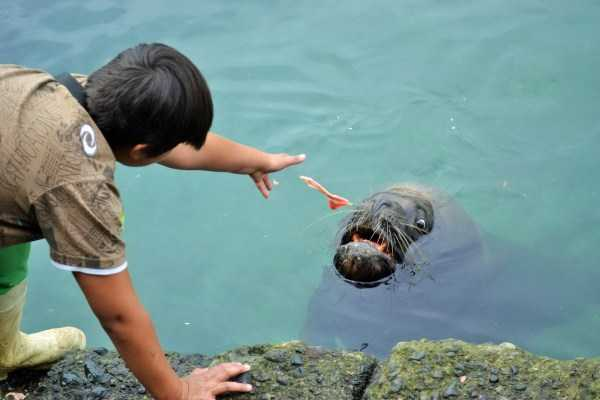 парень тянется рукой к морскому котику