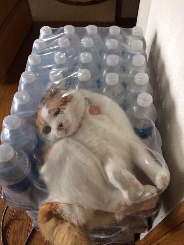 кот в паке бутылок