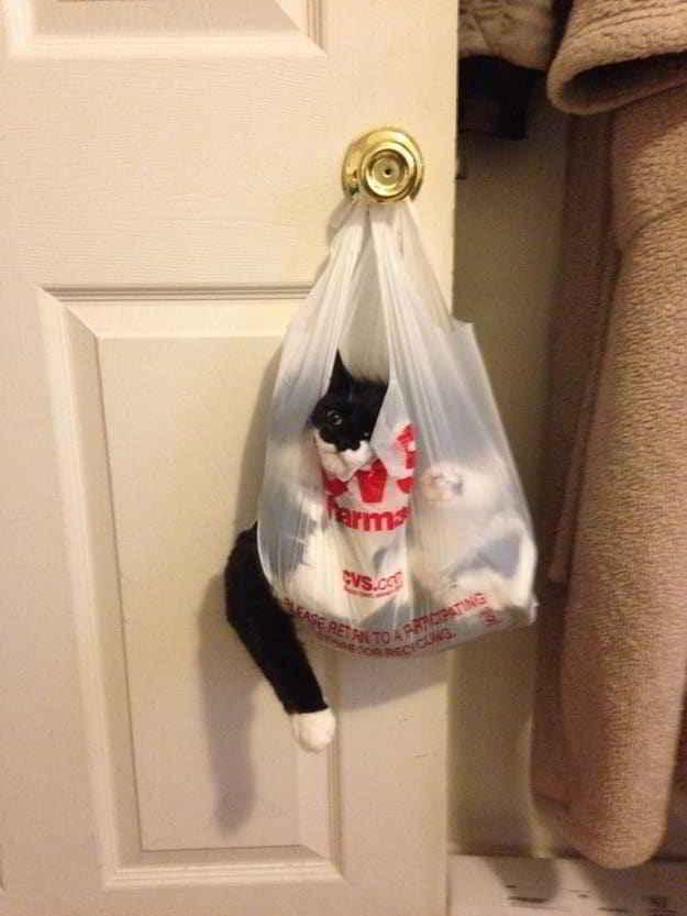 черный кот в пакете на двери