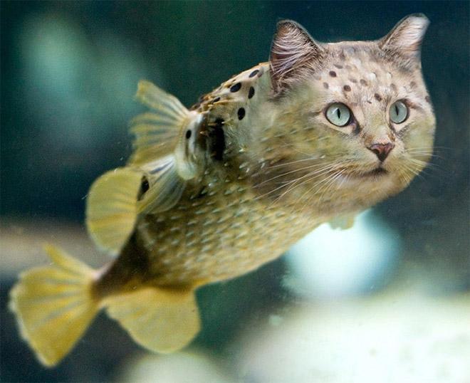 рыба и кот