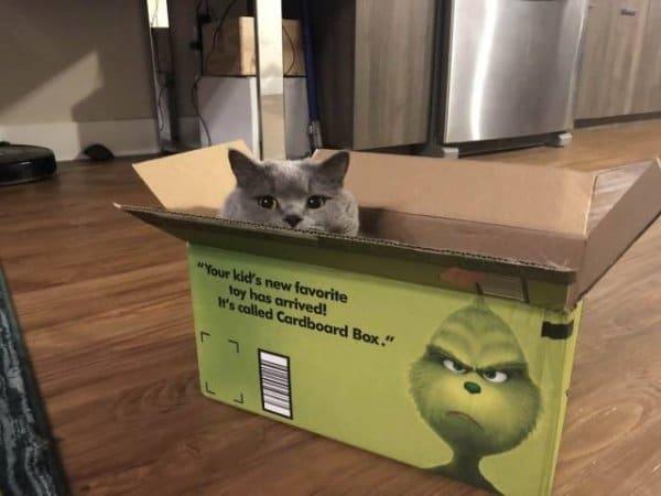 серый кот в зеленой коробке
