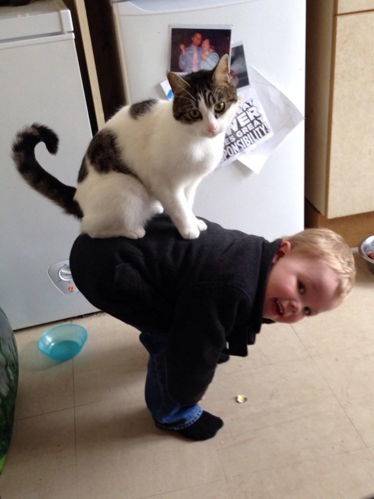 кот сидит на ребенке