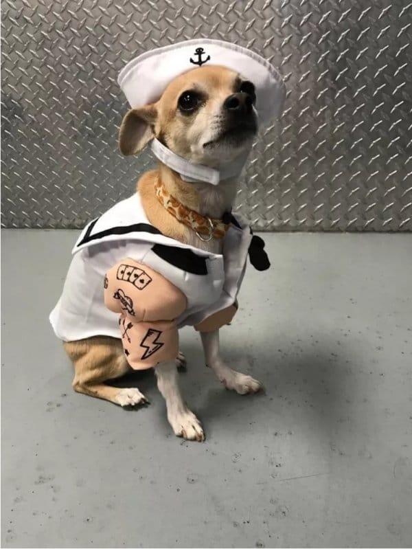 собака в форме матроса
