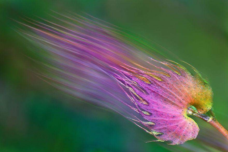 лист красивый цвет полоски