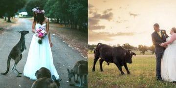 собаки, слоны и кошки на свадьбе