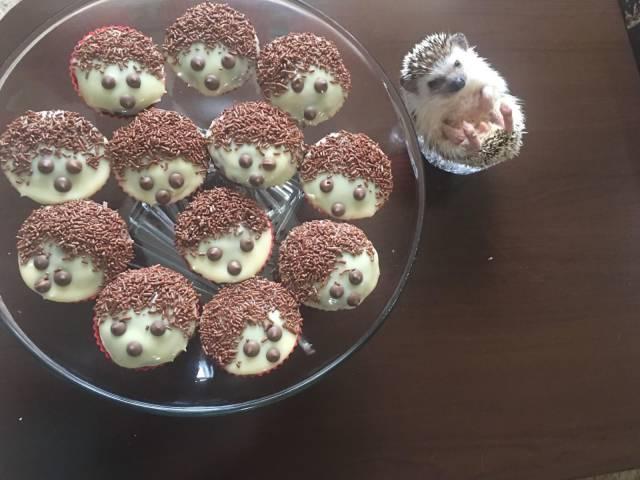 печенье в форме ежиков и еж