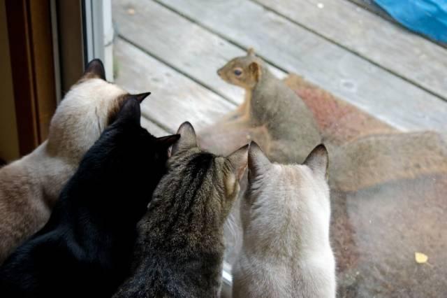 коты и белка