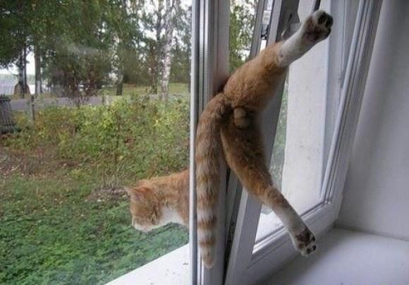 кот застрял в окне