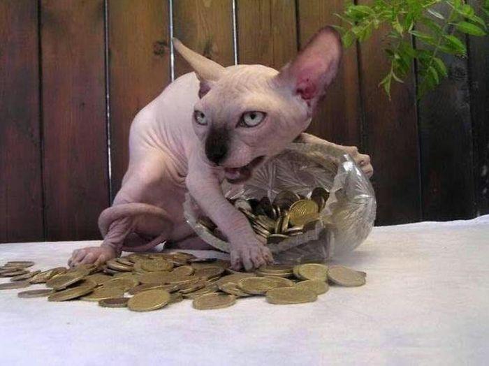 кот с монетами