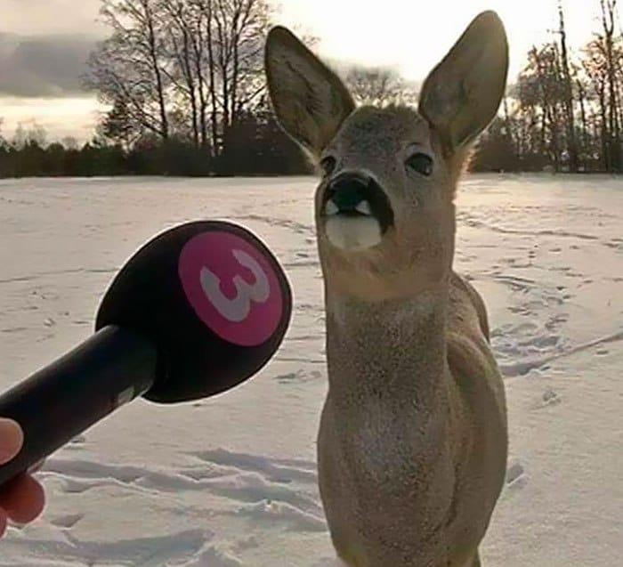 олень и микрофон