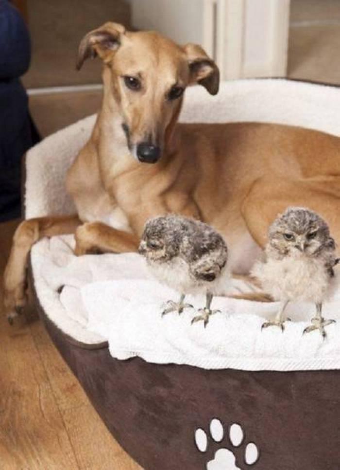 дружба собаки и птиц