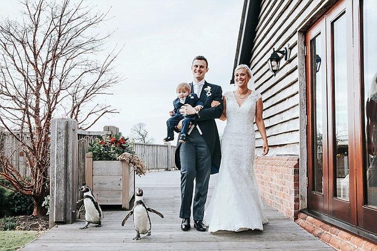 жених невесты и пингвины