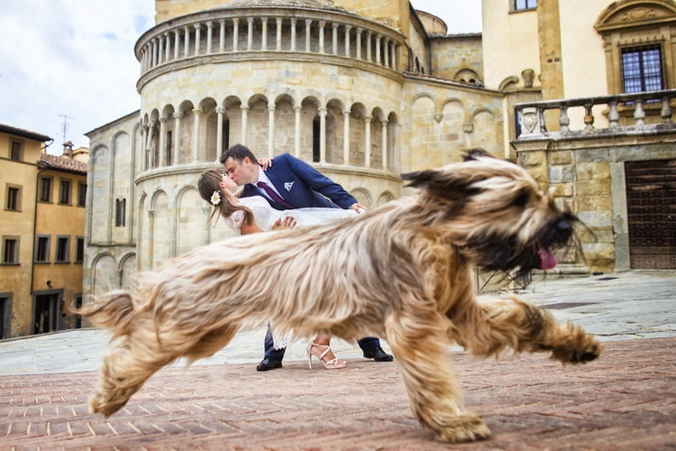 жених целует невесту и пробегает собака