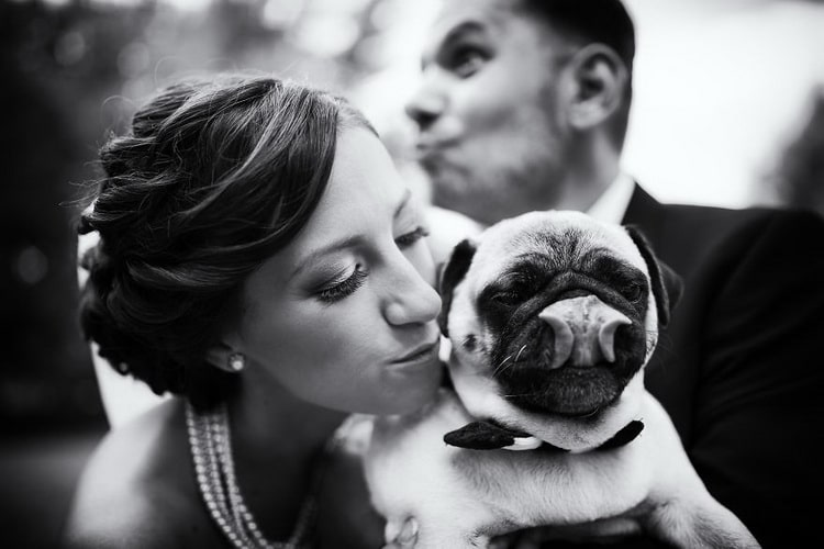 невеста целует мопса